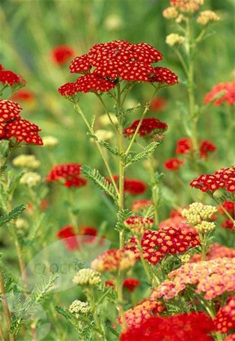 Garden Yarrow 15 Diy How To Make Your Backyard Awesome Ideas 5