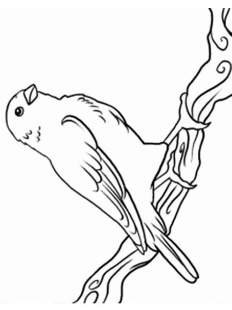 coloring pages canary bird canary coloring pages download and print canary coloring