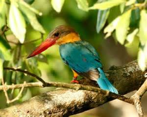 most colorful birds smilefun 20 of the world s most colorful birds