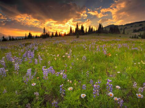 flower meadow wallpapers  hd wallpapers