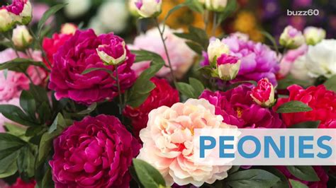 Best Flowers by Best Flowers To Plant For Summer