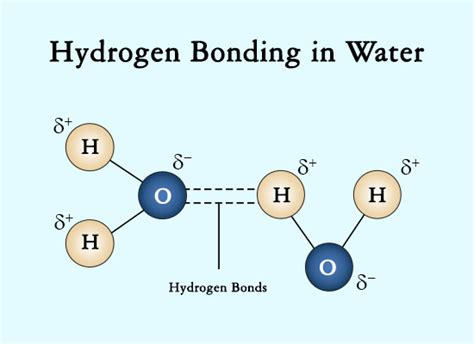 hydrogen bonding diagram a simple explanation of intermolecular forces with exles