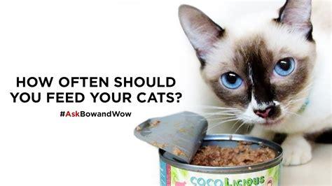 how often should you feed how often should you feed your cats askbowandwow youtube