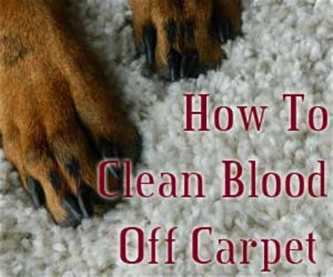 How Do You Get Blood Out Of A Mattress by How Do You Get Blood Out Of Carpet Carpet Vidalondon
