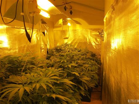 grow room design 3x400 grow room design by lemonjack420 member s album strain hunters forum