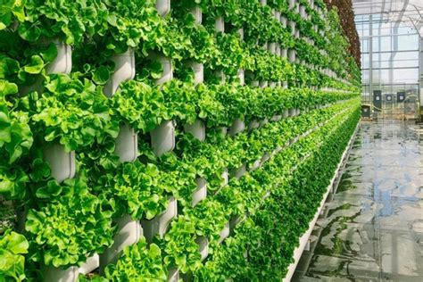 video eden greens vertical farm  cleburne