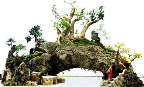 Bakalan Bonsai Sisir tips trick membuat bonsai untuk pemula centralbonsai