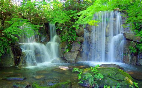 waterfall plant tree fern rocks stones green landscape