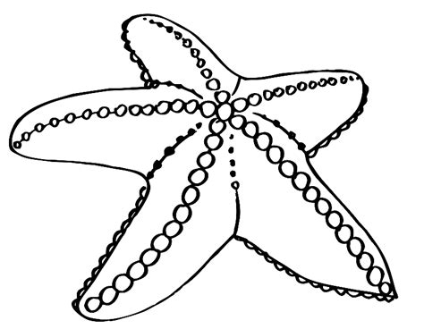 printable starfish coloring pages starfish coloring pages to download and print for free