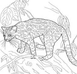 Ocelot Coloring Sheets Coloring Pages Ocelot Coloring Page