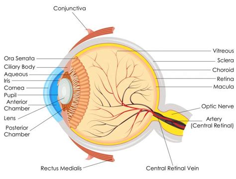 what part of the eye has color detached retina symptoms causes surgery and treatment