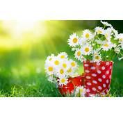 Good Morning Sunshine White Flowers  HD Wallpapers Rocks