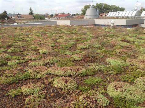 tetto giardino estensivo giardino pensile estensivo a sedum