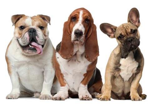 three dogs three dogs sitting760x538 paddington pupsthree dogs sitting760x538 paddington pups