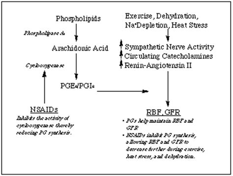 anti inflamatory drugs, kidney function, and exercise