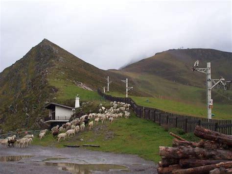 Chambre D Agriculture Drome by Le Loup Dans Le Haut Diois Pastoralisme Chambre D