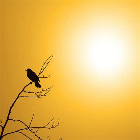 nature photography good morning sunshine yellow