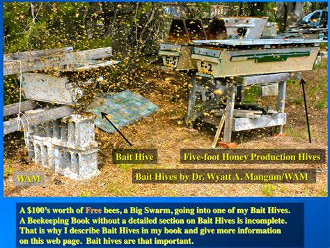 top bar bait hive bait hives free bees 200 top bar hives the low cost sustainable way
