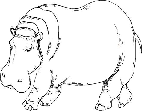 what color are hippos printable hippo coloring pages coloring me