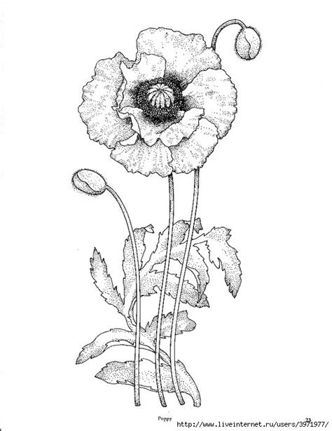 tattoo outline pen pin by trish cusack on pen ink floral pinterest