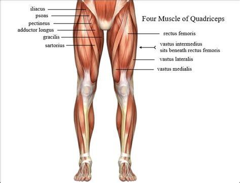 Quadriceps Muscles Exercises