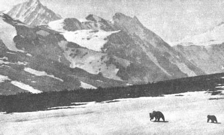 the grizzlies of mount mckinley classic reprint books the grizzlies of mount mckinley chapter 3