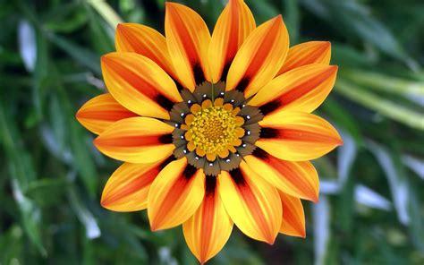 hele mooi bloemen bloemen achtergronden en foto s achtergronden