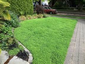 clover lawn and landscape micro clover lawn alternative level ground landscape
