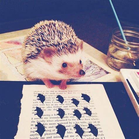 instagram picture books bookish hedgehogs of instagram