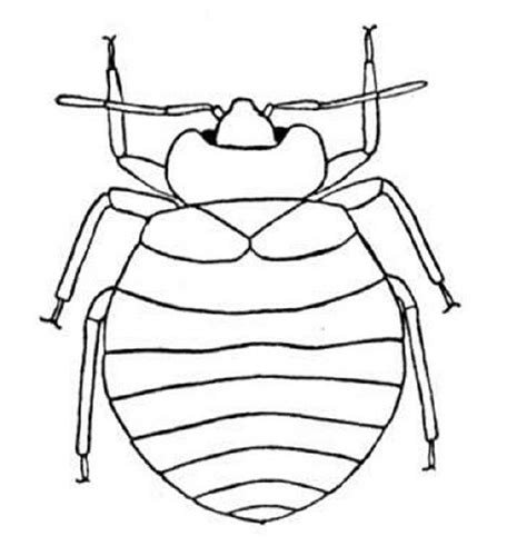 insect body parts coloring page coloring pages