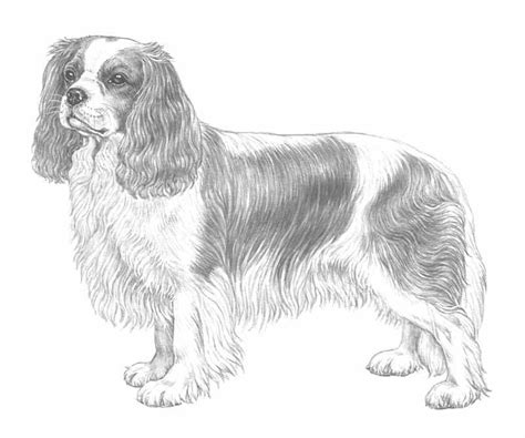 coloring pages of cavalier king charles spaniels free king charles i coloring pages