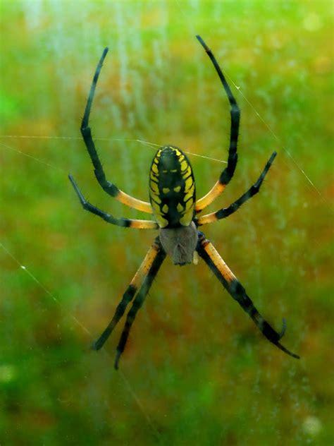 Garden Spider New York Fair Isle Usa Random Wildlife Vacation Photos From