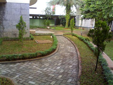 Jual Tanaman Bombay Di Jakarta Barat hasil my project jual tanaman hias