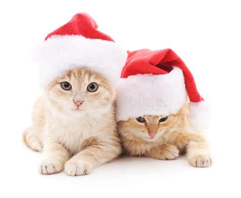 imagenes navidad gatitos gatitos en sombreros de la navidad imagen de archivo