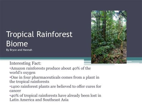 Ppt Tropical Rainforest Biome By Bryce And Hannah Rainforest Powerpoint
