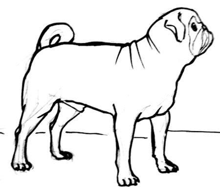 pug outline drawing how to draw a pug