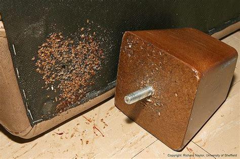 kill bed bugs in sofa bed bugs mistaken identity ibbra