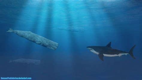 blue whale vs whale shark megalodon shark vs whale