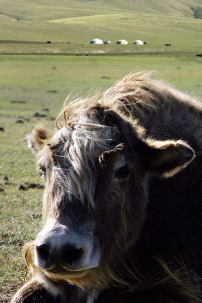 yak decke lixfeld yak decke braun avocadostore