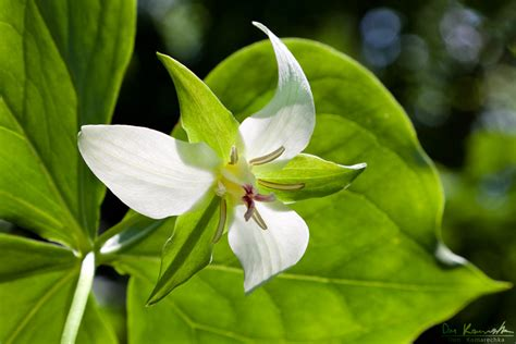the universe as i see it 187 trillium species of ontario