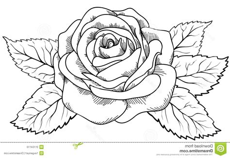 Outline Drawing At Getdrawings Com Free For Personal Use Outline Drawing Of Your Choice Free Drawing Pictures