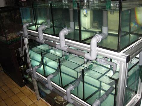 fish tank showoff info thread reef2reef
