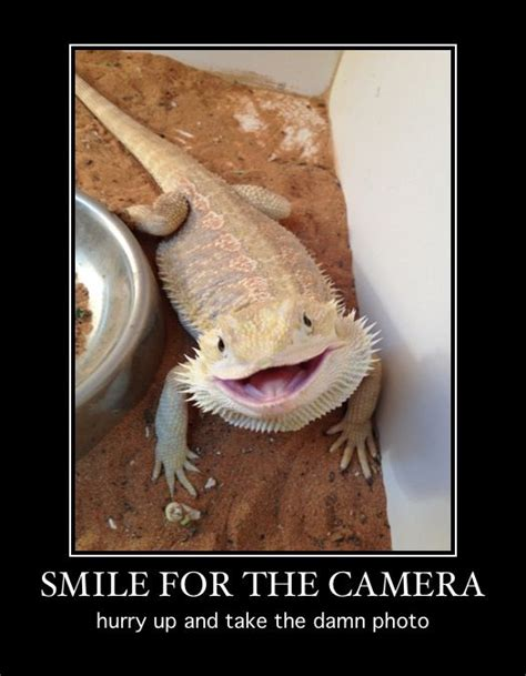 Bearded Dragon Meme - pinterest the world s catalog of ideas