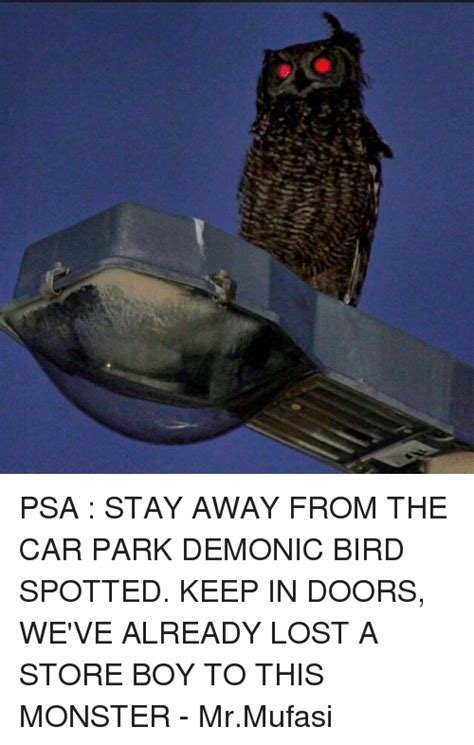 keep birds away from car bing images
