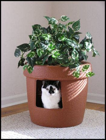 why do cats meow at humans litter box planters and box