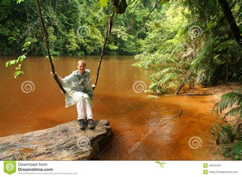 jungle swing jungle swing stock image image 24543161