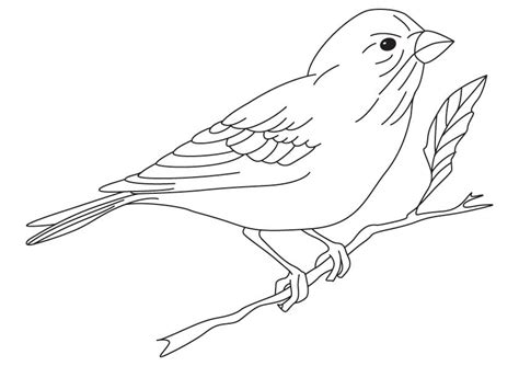 Yellow Finch Coloring Page | yellow finch coloring pages download and print for free