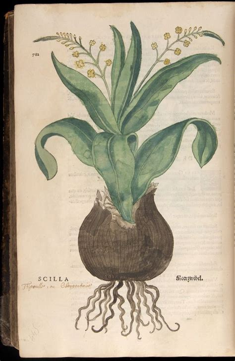 libro the art of botanical naturalists fuchs leonhart 1501 1566 wemding 17 gennaio 1501 tubinga 10 maggio 1566