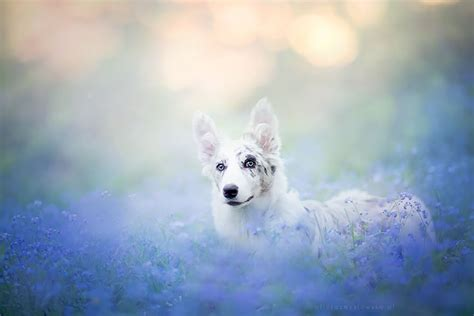 most beautiful dogs this photographer takes the most beautiful photos 13 pics bored panda
