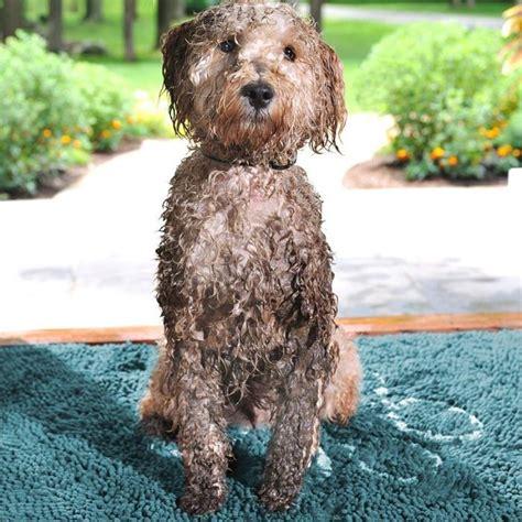 super absorbent dirty dog doormats    sizes
